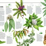 Australian Geographic Nature Watch article - Edible bushfood