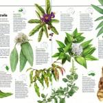 Australian Geographic Nature Watch article - Edible bushfood