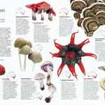 Australian Geographic Nature Watch article - Fungi