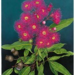 "Corymbia ""Summer Red"". Watercolour"