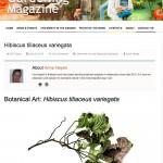 The Gardening Magazine - article